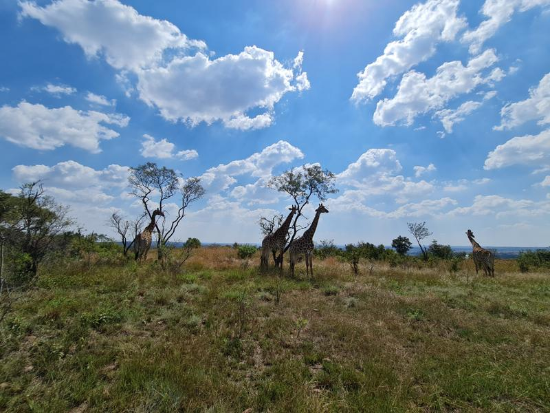 Vacant Land / Plot For Sale in Sable Hills, Roodeplaat